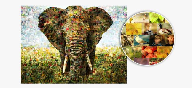 Funcion un foto mosaico elefante