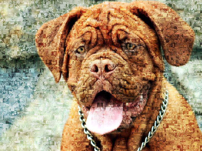 Foto mosaico de perro Dogo de Burdeos