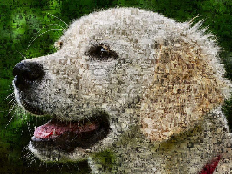 Foto mosaico de perro Golden Retriever