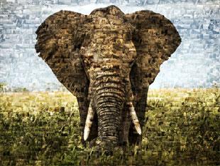 Elefante en foto mosaico