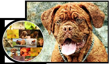 Foto mosaico perros detalle